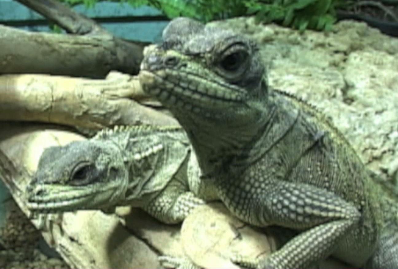 Houston Zoo Paul Michaels