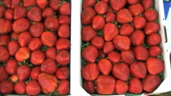 Strawberry Festival-4