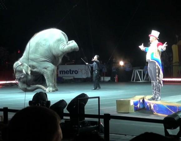 Circus 2015 YouTube 3-47-L