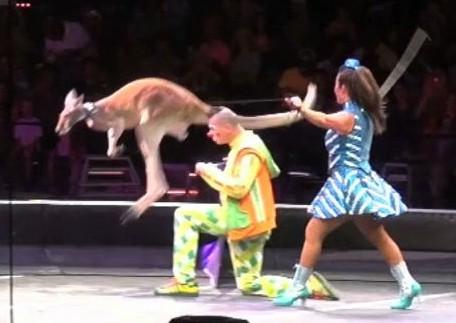 Circus 2015 YouTube 4-5