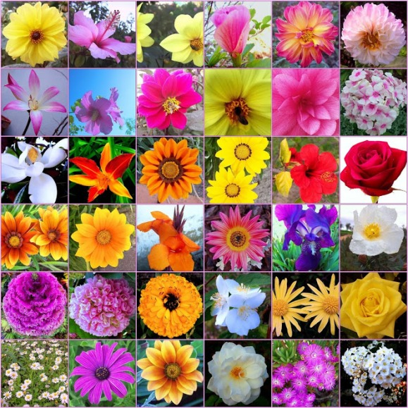 types-of-flowers