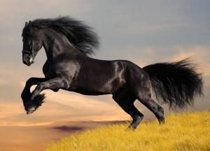 horse-07